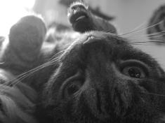 Cat - Lili